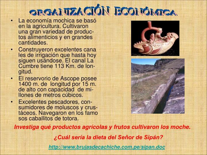 La economía mochica se basó en la agricultura. Cultivaron una gran variedad de produc-tos alimenticios y en grandes cantidades.