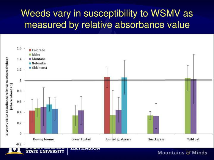 Weeds vary in susceptibility to WSMV as measured by relative absorbance value