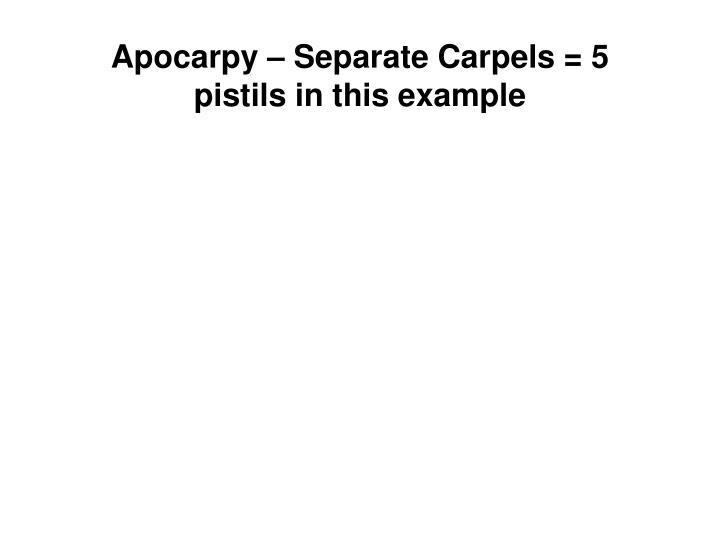 Apocarpy
