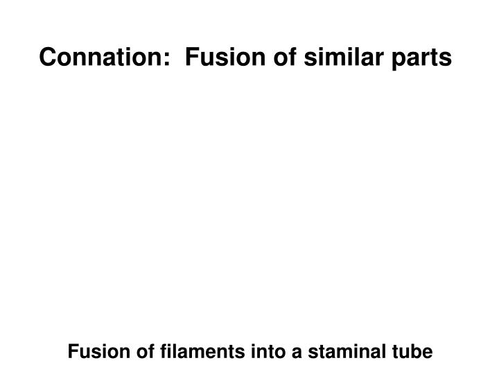 Connation:  Fusion of similar parts