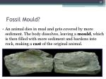 fossil mould