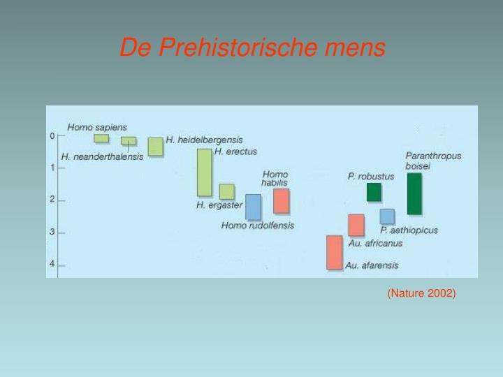 De Prehistorische mens