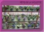 f te de la violette2