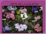 f te de la violette5