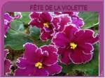 f te de la violette6