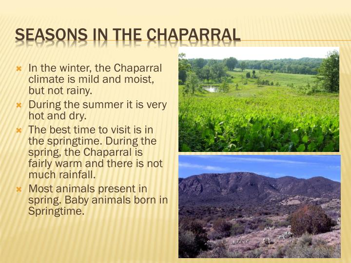 Seasons in the Chaparral