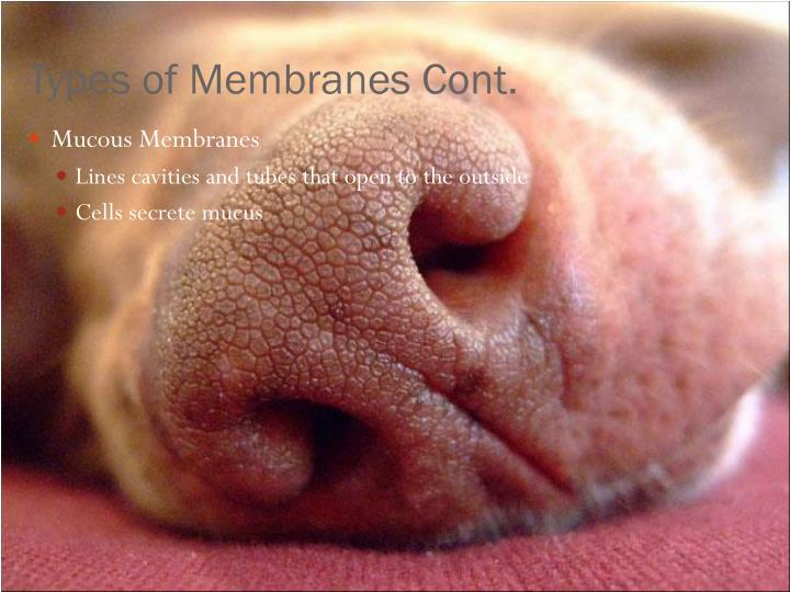Types of Membranes Cont.