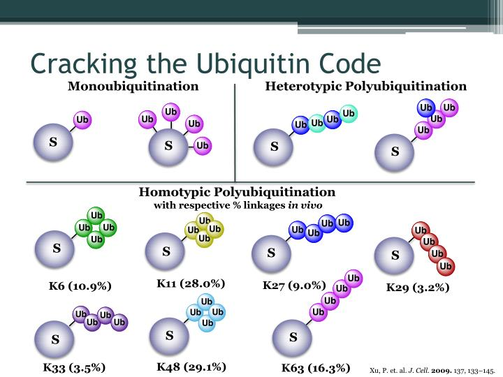 Cracking the Ubiquitin Code