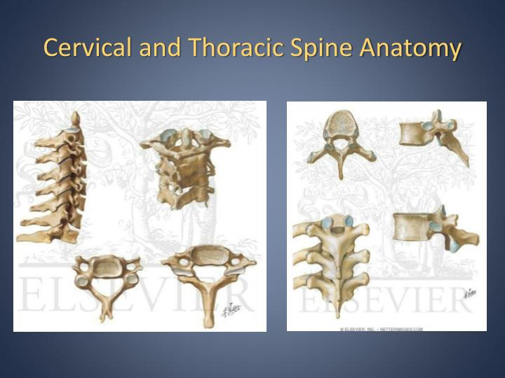 Cervical and Thoracic Spine Anatomy