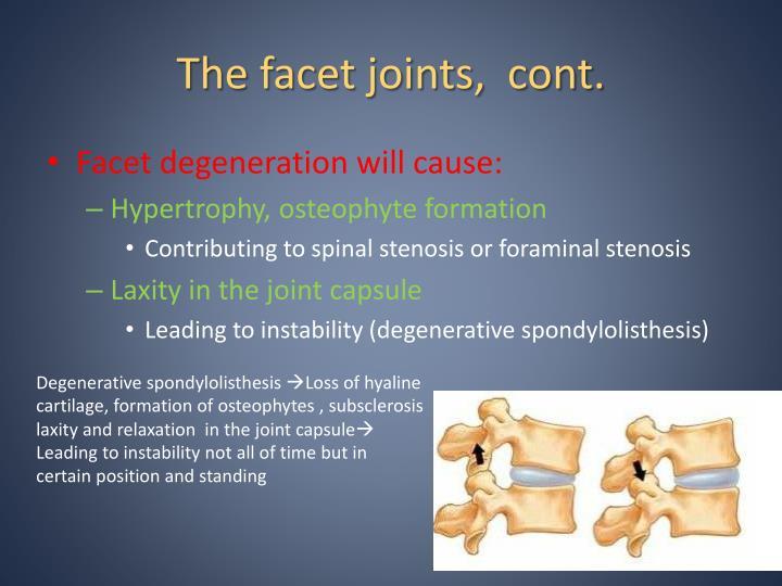 The facet joints,  cont.
