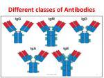 different classes of antibodies