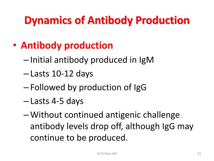 Dynamics of Antibody Production