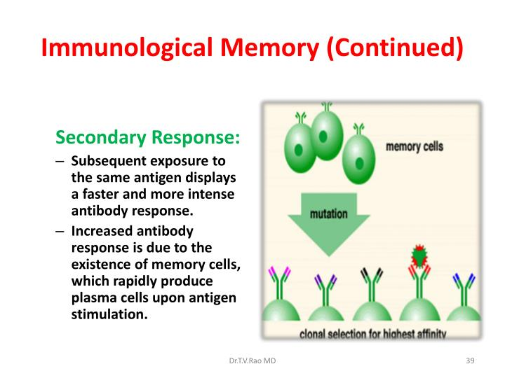 Immunological Memory (Continued)