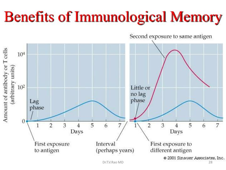 Benefits of Immunological Memory