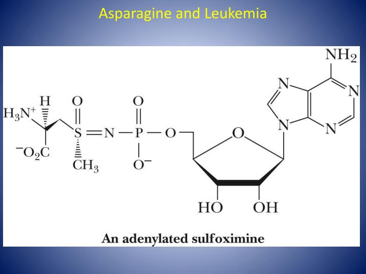 Asparagine and Leukemia