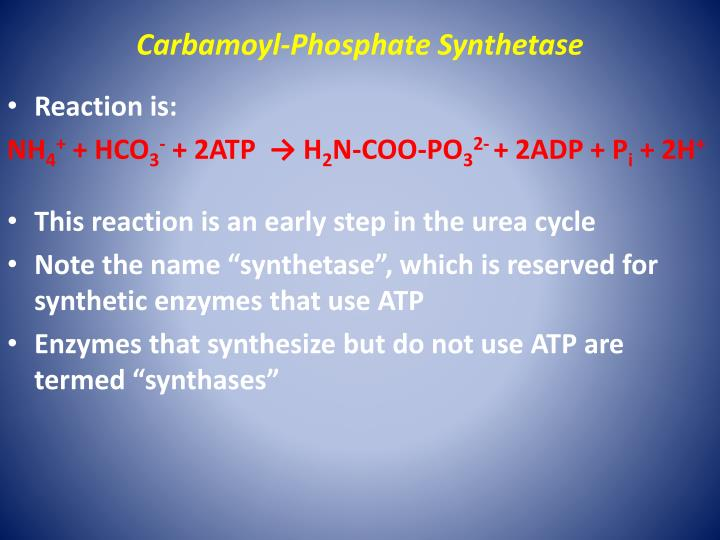 Carbamoyl-Phosphate Synthetase