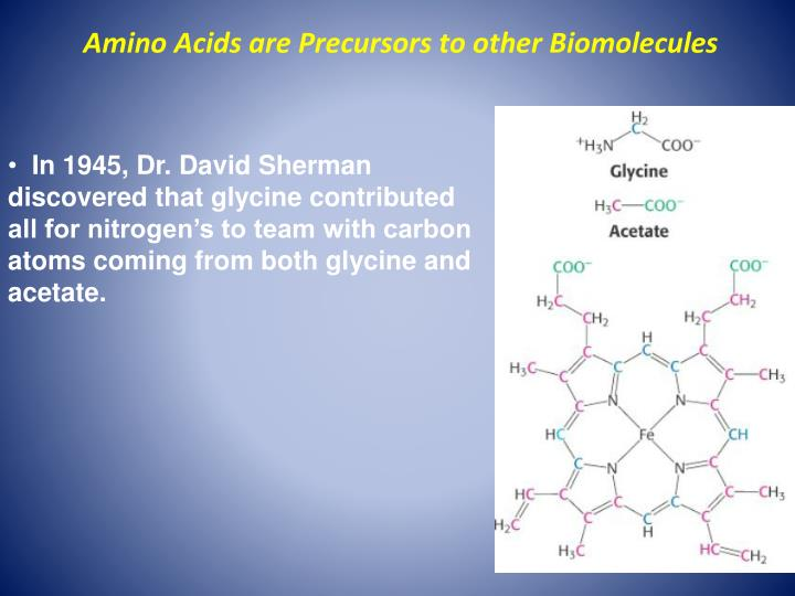 Amino Acids are Precursors to other