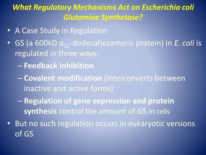 What Regulatory Mechanisms Act on Escherichia coli Glutamine