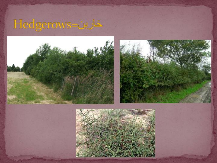 Hedgerows=
