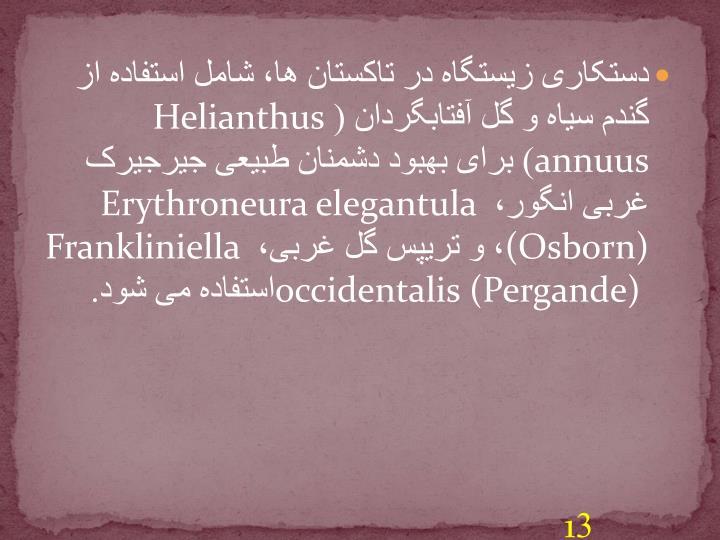 دستکاری زیستگاه در تاکستان ها، شامل استفاده از گندم سیاه و گل آفتابگردان (