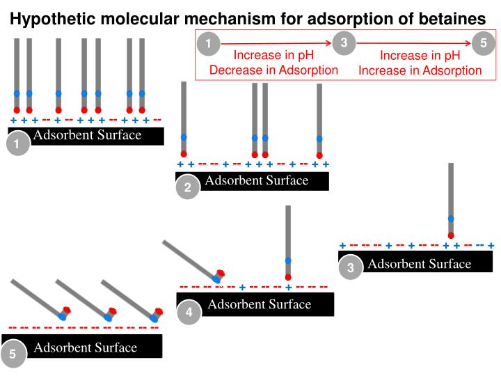 Hypothetic molecular mechanism for adsorption of betaines