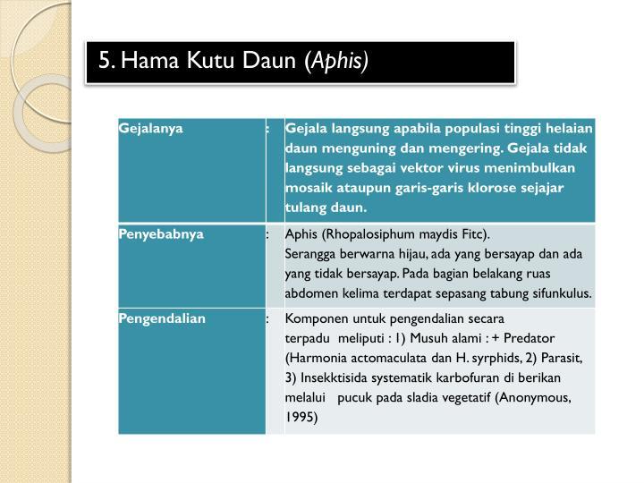 5. Hama