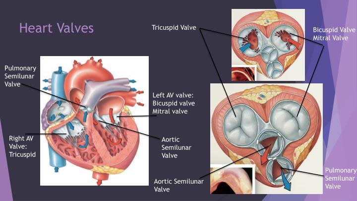 PPT - Pulmonary Circulation PowerPoint Presentation - ID ...
