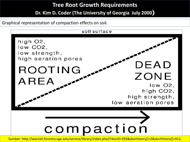 Tree Root Growth Requirements