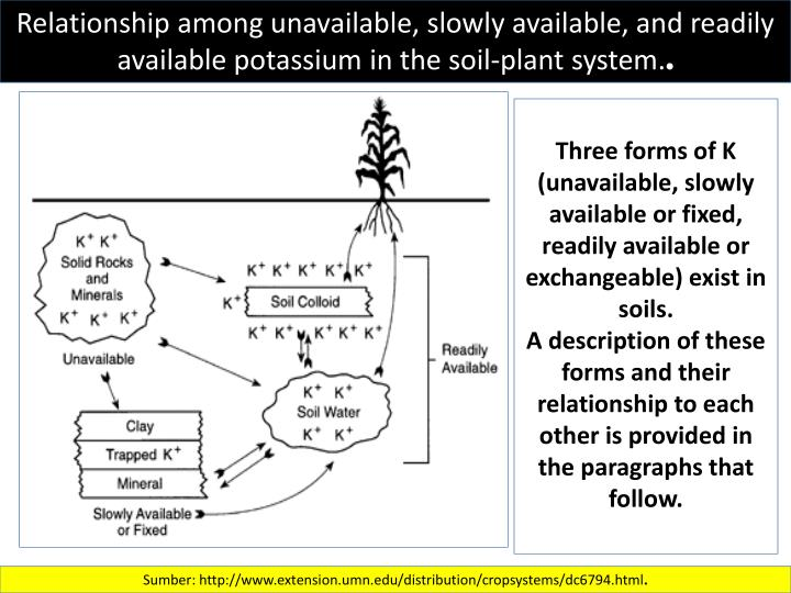 Relationship among unavailable, slowly available, and readily available potassium in the soil-plant system.