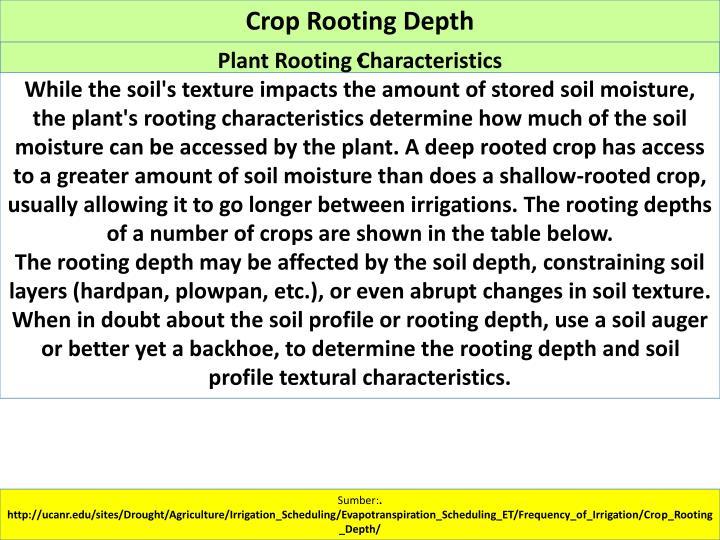 Crop Rooting Depth