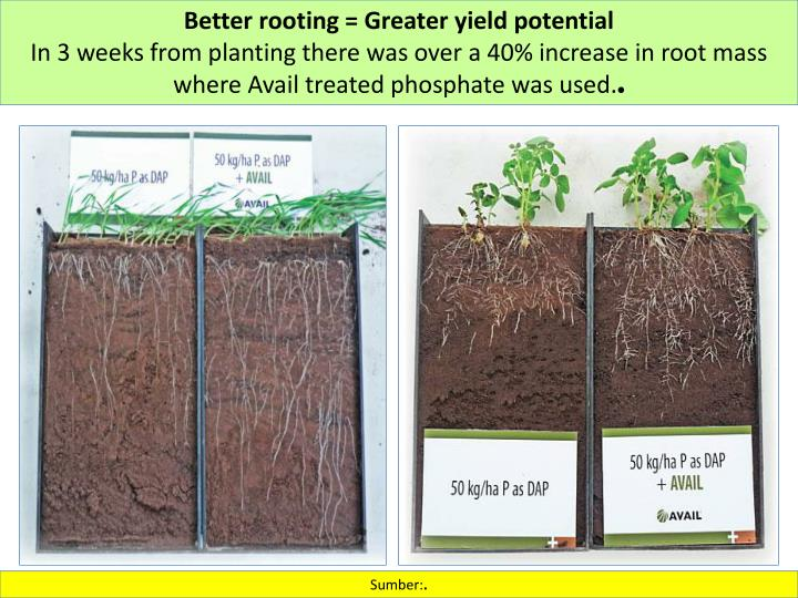 Better rooting = Greater yield potential