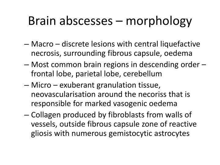 Brain abscesses – morphology