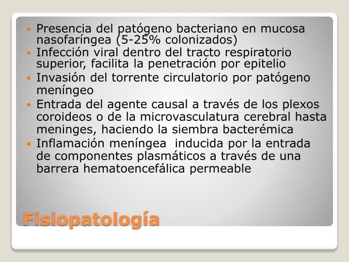 Presencia del patógeno bacteriano en mucosa