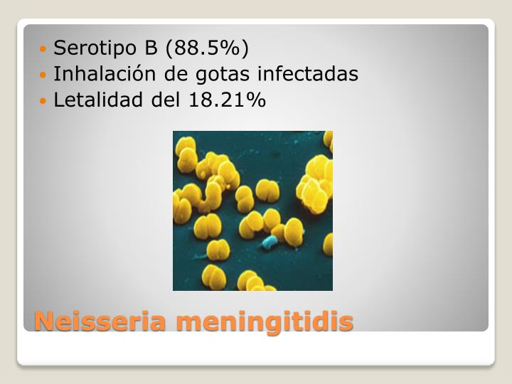 Serotipo B (88.5%)