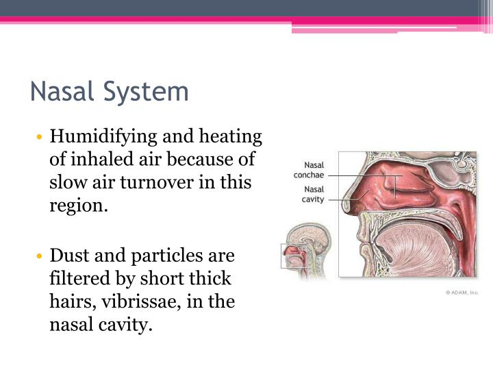 Nasal System