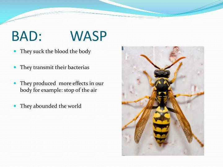 BAD:        WASP