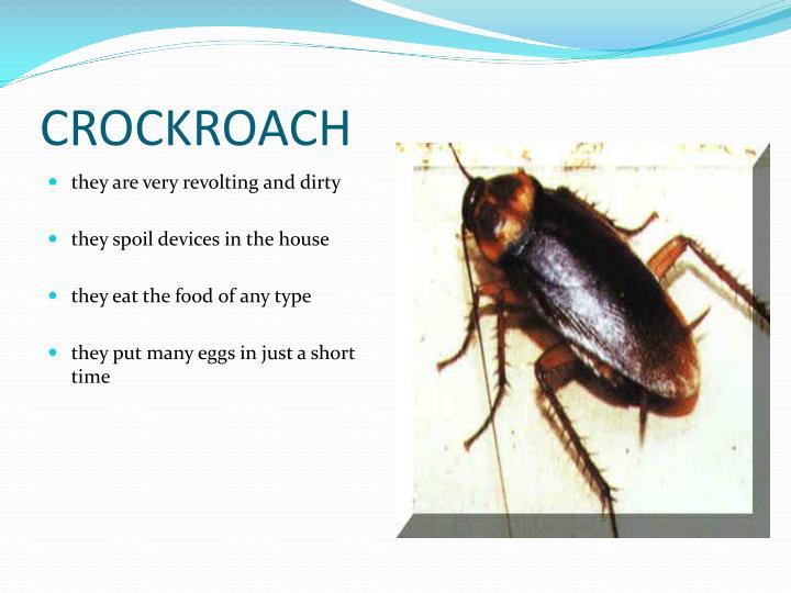 CROCKROACH