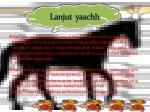 lanjut yaachh
