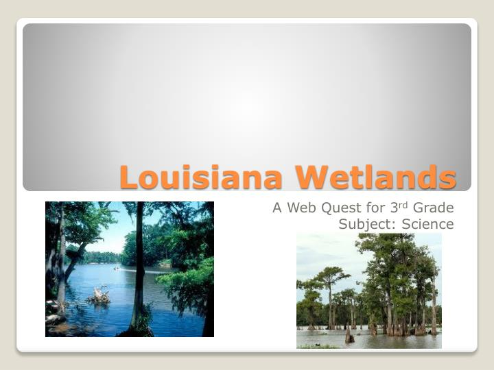 louisiana wetlands