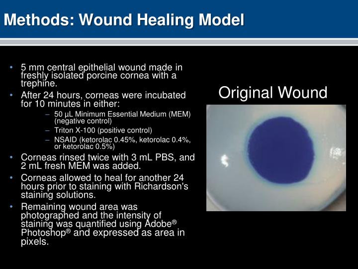 Methods: Wound Healing Model