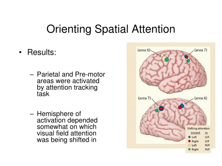 Orienting Spatial Attention