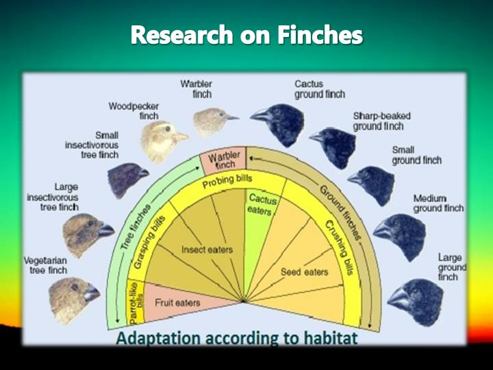 Research on Finches