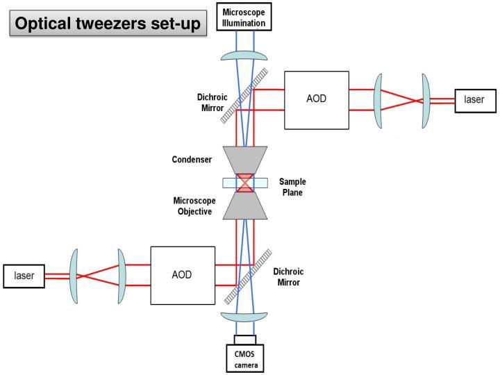 Optical tweezers set-up
