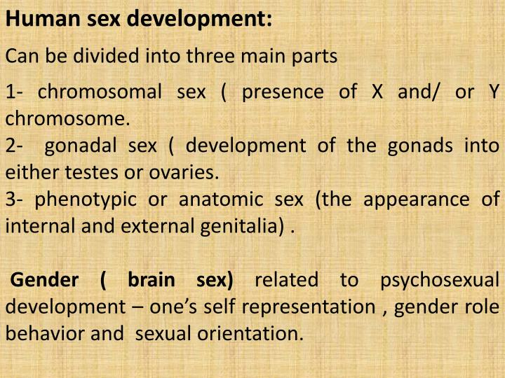 Human sex development:
