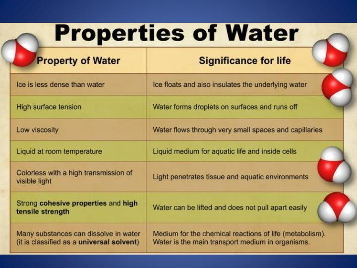 What Makes Water so Important?
