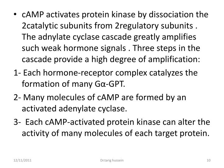 cAMP activates protein kinase by dissociation the 2catalytic subunits from 2regulatory subunits . The adnylate cyclase cascade greatly amplifies such weak hormone signals . Three steps in the cascade provide a high degree of amplification: