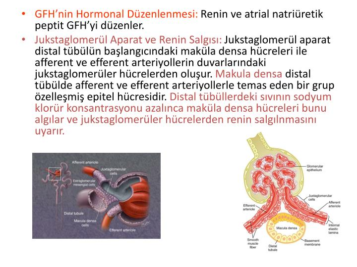 GFH'nin Hormonal Düzenlenmesi: