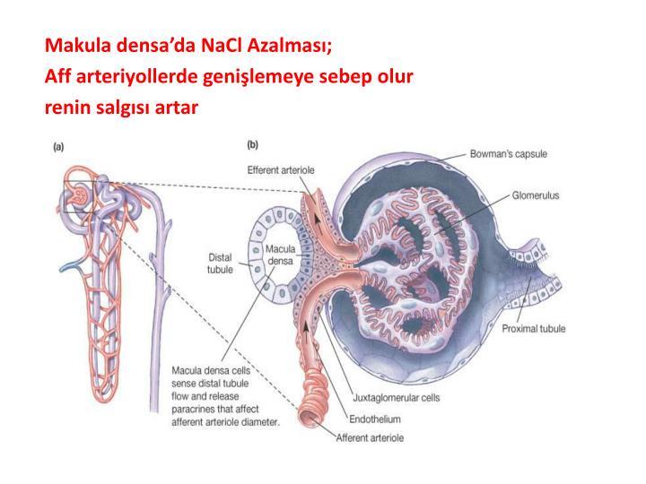 Makula densa'da NaCl Azalması;