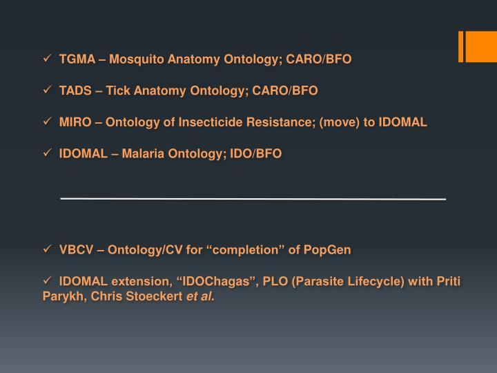 TGMA – Mosquito Anatomy Ontology; CARO/BFO