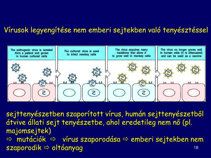 Vírusok legyengítése nem emberi sejtekben való tenyésztéssel